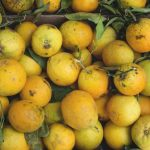 citrus fruit to enhance immunity