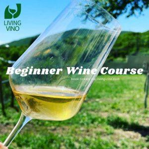 beginner wine course